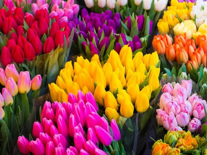 shutterstock_tulipaner-1200x628